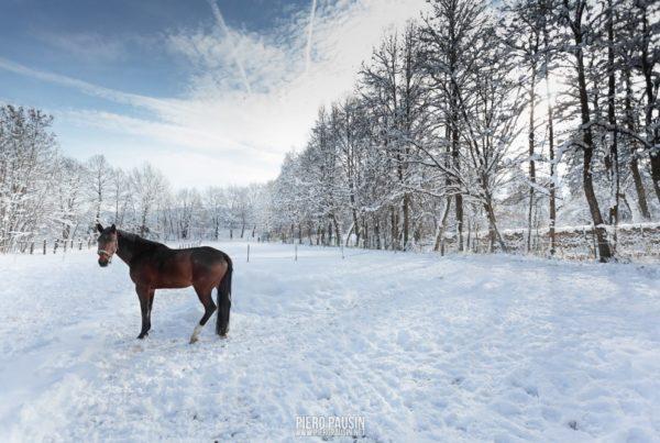 Warmbad - cavallo sulla neve