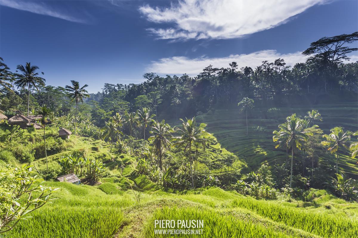Life in Bali – Mostra fotografica a Trieste