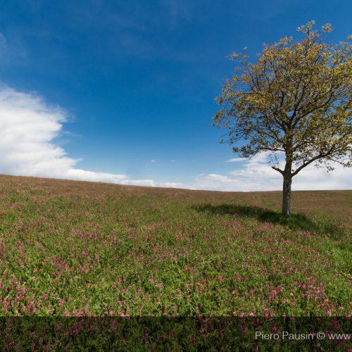 Campo di Fiori in Toscana